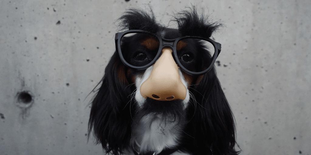 Blog-gekkiggeit-5-willekeurige-en-gekke-weetjes-hond-met-fopbril-op